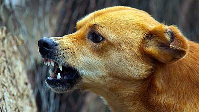 Medici veterinari din SUA vor steriliza maidanezii din Chişinău