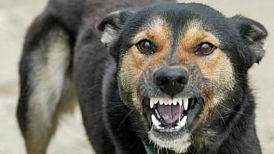 Câinii fără stăpân din Chişinău, sterilizați de 25 de medici veterinari din SUA