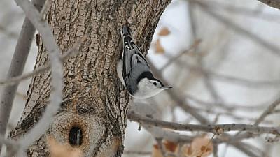 Cantină pentru păsări. Cum a reușit un elev din Capitală să stângă la masă mai multe specii de păsări
