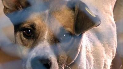 Peste 300 de câini dintr-un azil din Capitală riscă să moară de foame. Animalele supravieţuiesc doar din donaţii