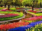 Imaginea zilei: Parcul Keukenhof din Olanda este cel mai impresionant paradis floral din lume