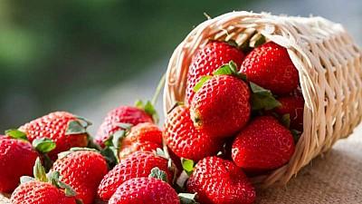 Veste bună pentru producătorii de căpşune. Inventatorii americani au prezentat un robot care poate culege fructele