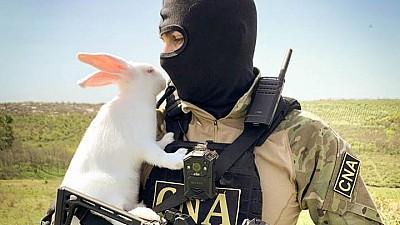 Ofiţerii CNA vă felicită cu ocazia sărbătorilor pascale: De Paşte, putem şi noi să fim albi şi pufoşi