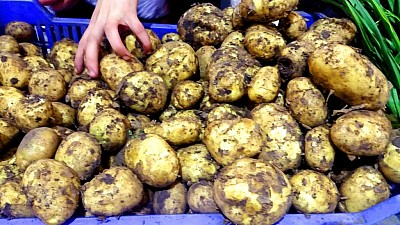 Patru camioane pline cu cartofi din Belarus, întoarse din vamă. Ce a depistat ANSA în legume