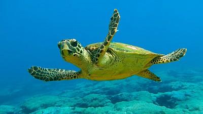 Ziua Mondială a Broaștelor Țestoase. Cele mai interesante curiozități despre aceste reptile