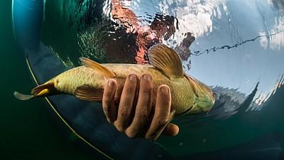 Zeci de kilograme de peşte prins cu mâna de către oamenii din Dereneu, după ce digul iazului din localitate a cedat