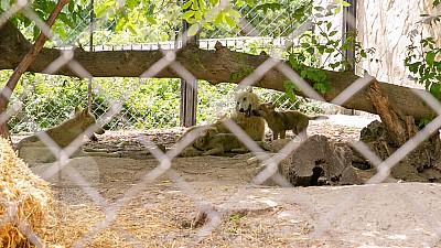 Animalele de la Grădina Zoologică din Capitală sunt hrănite cu fructe congelate