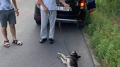 Diaconul Ghenadie Valuţă va fi CERCETAT de judecata bisericească pentru că a legat un câine de maşină și l-a târât pe asfalt