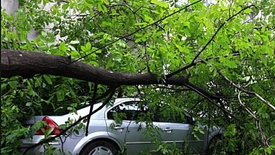 Un copac de cireş a căzut peste două autoturisme parcate în curtea unui bloc din sectorul Râşcani al Capitalei