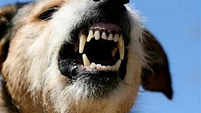 Copilul care a fost muşcat de un câine infectat cu rabie, A MURIT în spital