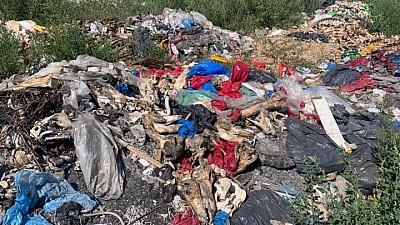 Catastrofă ecologică în satul Bulboaca. La groapa de gunoi sunt aruncate resturi animaliere